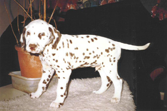 Clayton as a Pup
